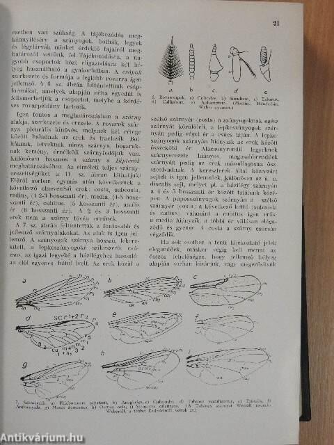 A phanerogamic paraziták meghatározása. Parazita növény