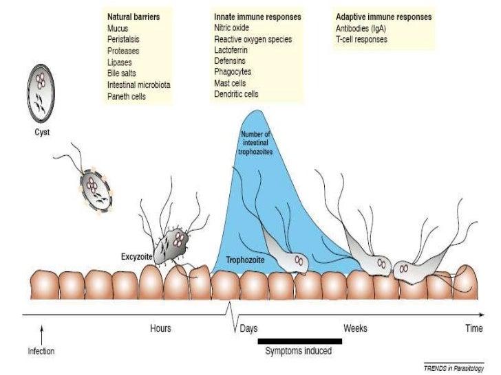 a giardiasis patogenezise