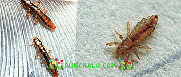 Helminták fertőzése - milyen gyógyszer fogja megmenteni a kertet a parazitáktól és a betegségektől?