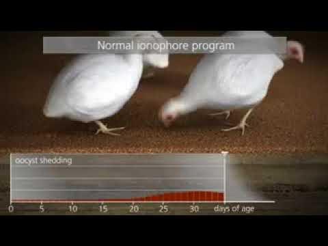A pinworms mozog e vagy sem szájszagú betegségek okai