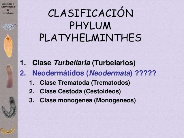 platyhelminth taxonómia