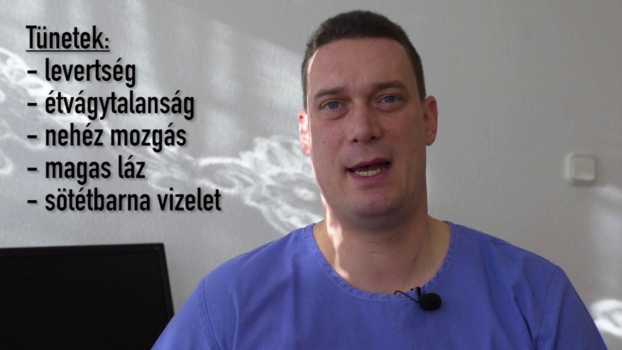 a gömbférgek kezelésének tünetei)
