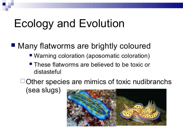 platyhelminthes filum reprodukciós rendszer