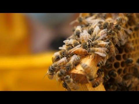 szemölcsök a méh tüneteiben)