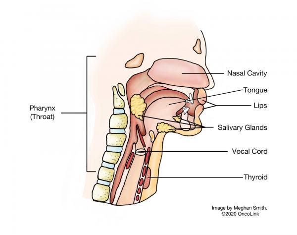 oropharyngealis laphámsejtes karcinóma