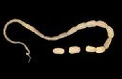 parazita kód macaka