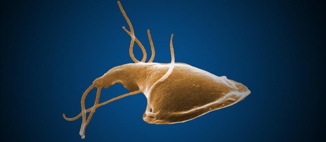 Giardia készítmények és egyéb paraziták)