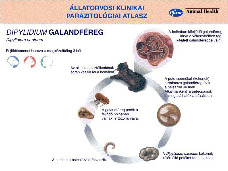 parazita tabletták listája máj gogulan tisztító paraziták