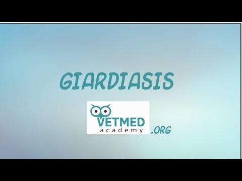 állatorvosi kézikönyv giardia merck