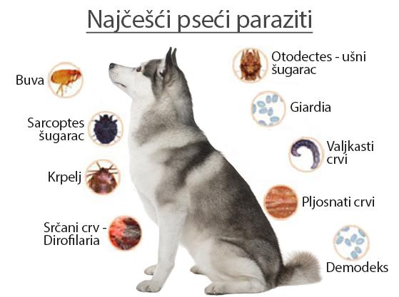 Természetismereti szótár Rječnik poznavanja prirode