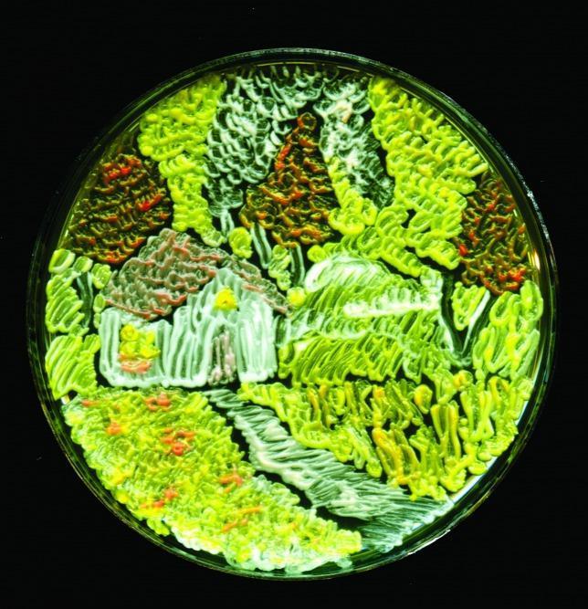 paraziták koktélkezelése hím humán papillomavírus tünetei