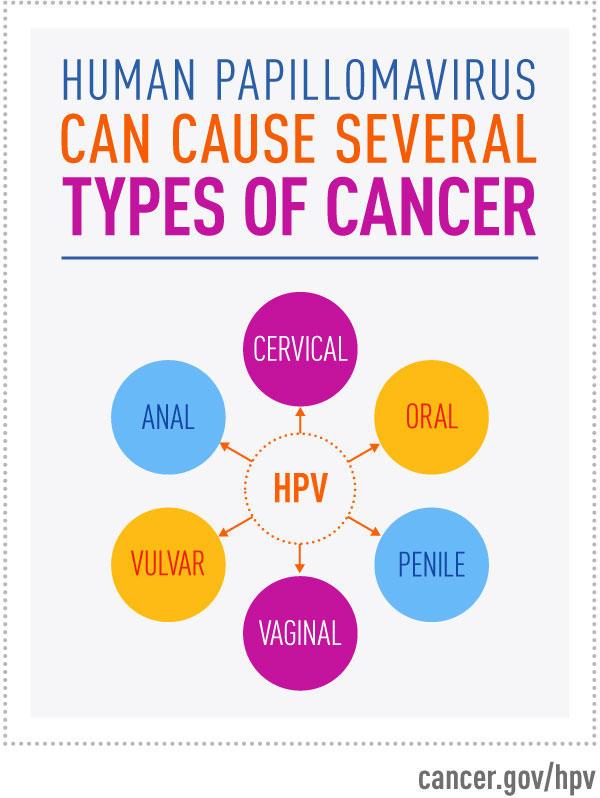 hpv vírus és pap 2)