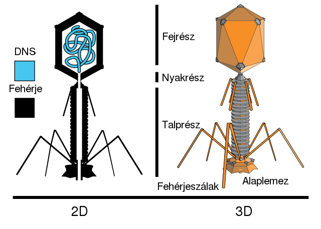 vírusok példa