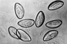 enterobiosis biomaterial