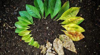 A kovaföld paraziták gyógyulnak. Kiemelt ajánlataink
