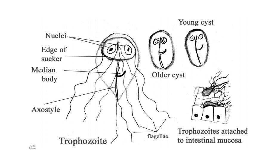 a giardia duodenalis tünetei