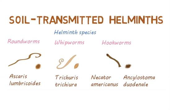 helmint fertőzés nhs