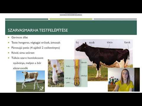 a fiatal marhák az emberi testben