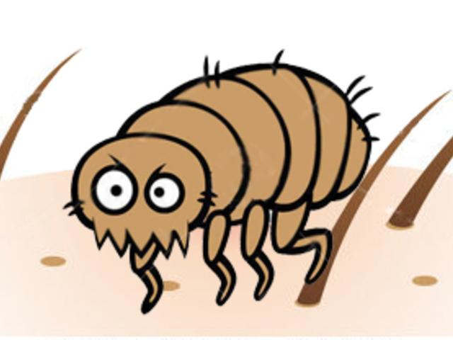 a bőr mikroszkopikus parazitái