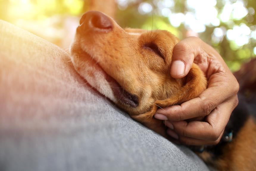Pasozyt giardia u psa objawy Giardia leczenie psa. Enterobiosis ápolási folyamat gyermekeknél