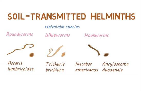 helmint fertőzés nhs)