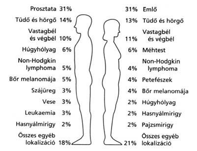 papillomavírus elimináció emberben cerverization a nyaki szemölcsök