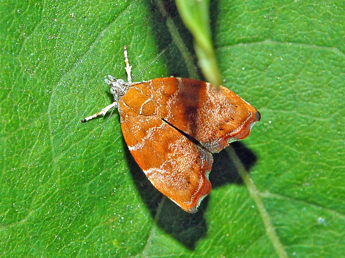 papilloma vírus nedir gyógyszerek az emberi paraziták megszüntetésére