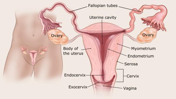 endometrium rák progressziója