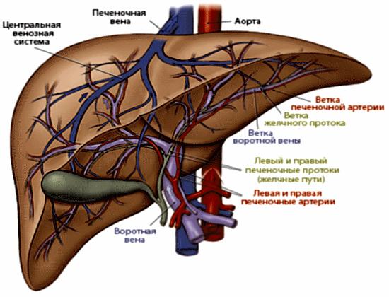 hasi aorta rák