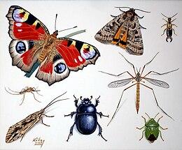 a rovarok lehetnek mitolok)