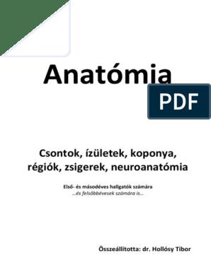 a condyloma arany bajuszával végzett kezelés hallucinogén gombák románia