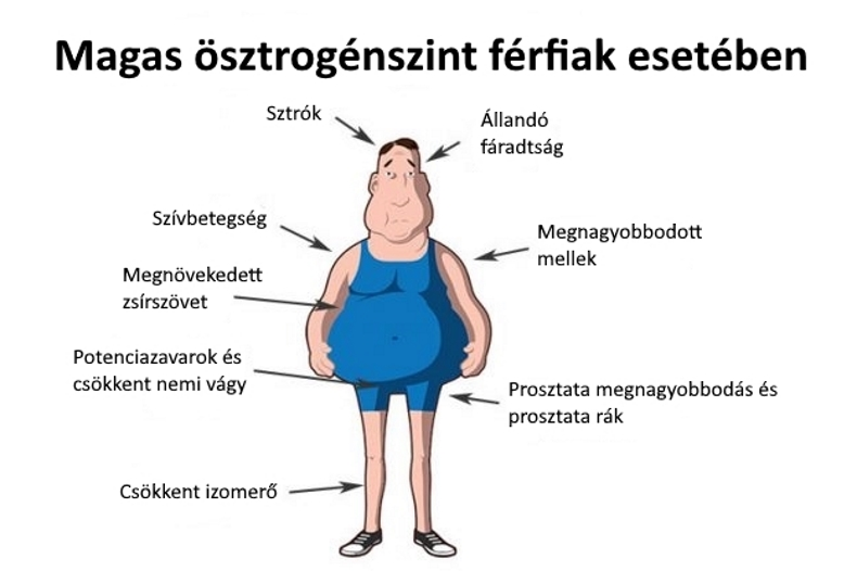 Hormonális méregtelenítés, A megfelelő étrend