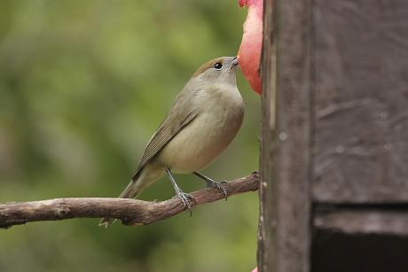 parazitaellenes szer madarak számára