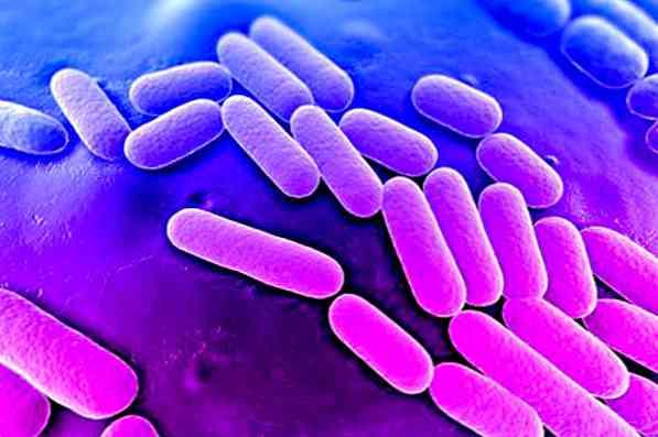 klebsiella oxytoca baktériumok amellyel a papillómák megszűnnek