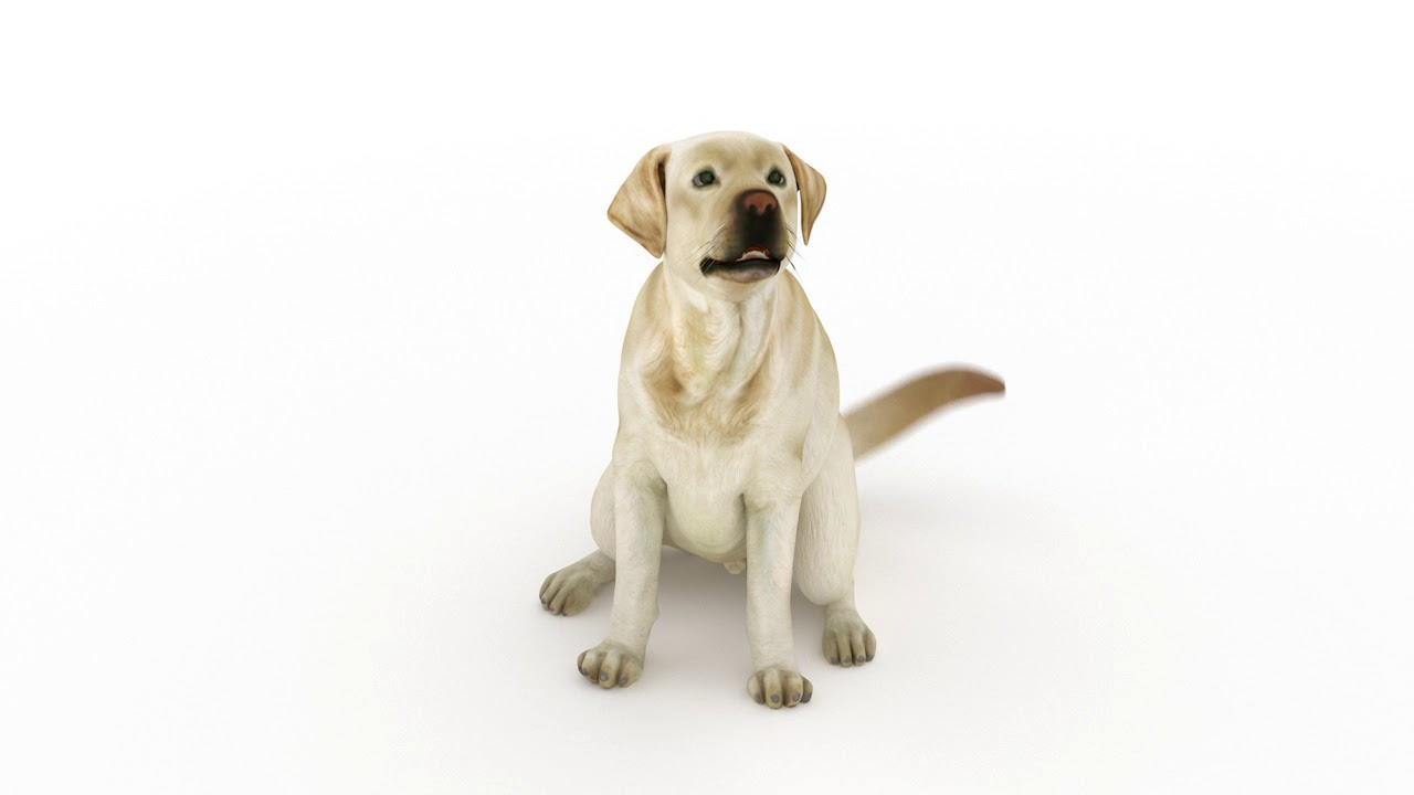 A kutya daganat tünetei