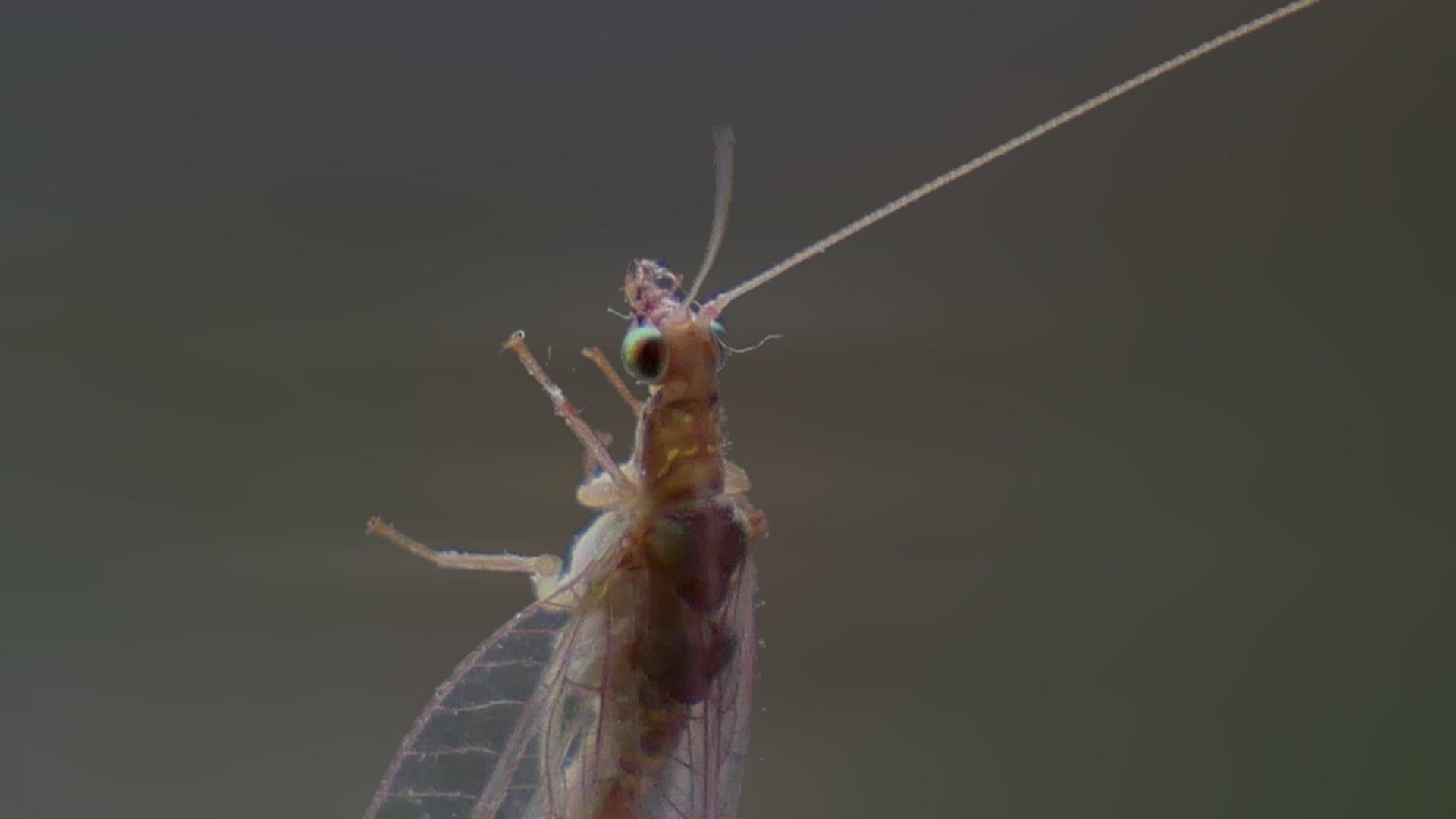 Parazita háttérkép Les paraziták vakarja a zenét - Parazita a háttérképen