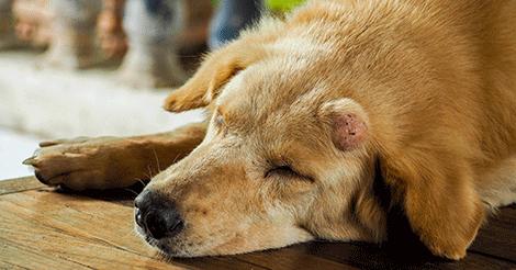 A kutya daganat tünetei - 10 jel ami daganatra utalhat | Kutyaegészsémaniactattoo.hu