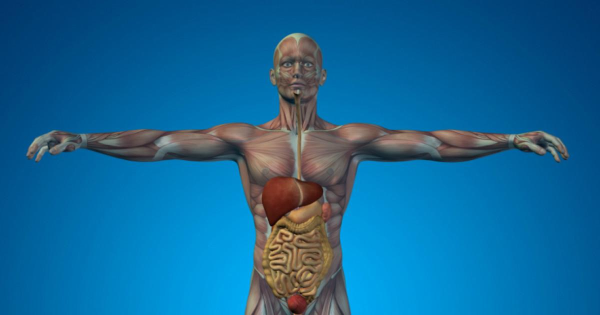 A test természetes védelme