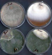 a baktériumok biológiai védekezése)