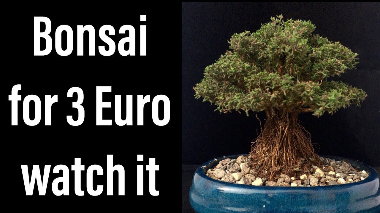 bonsai paraziták