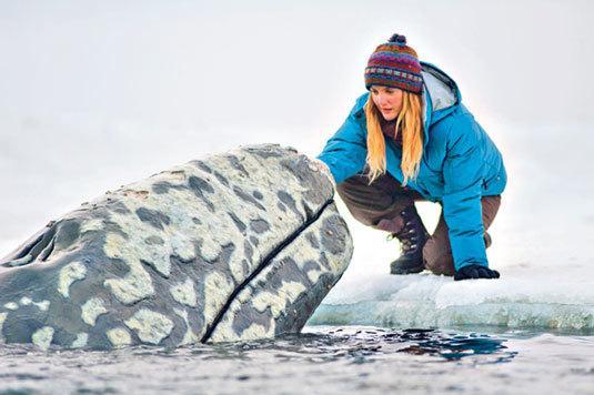hogy nem szereti a bálnát)