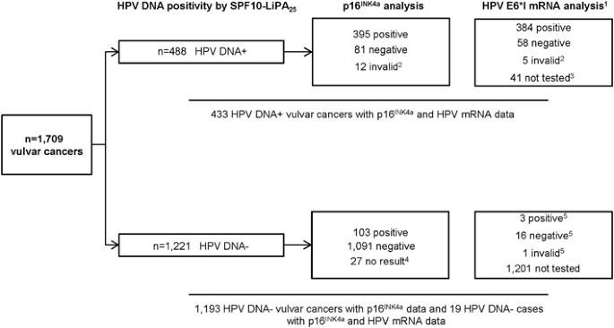 Humán papillómavírus (HPV) vizsgálat | Lab Tests Online-HU