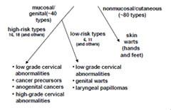 humán papillomavírus cdc