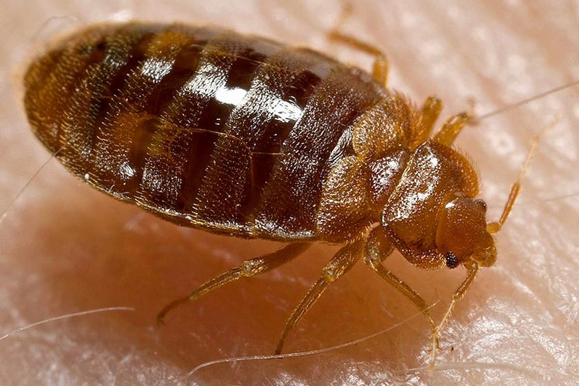 Mitől Rovar egy rovar?