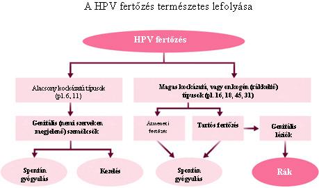 hpv 66 rák kockázata)