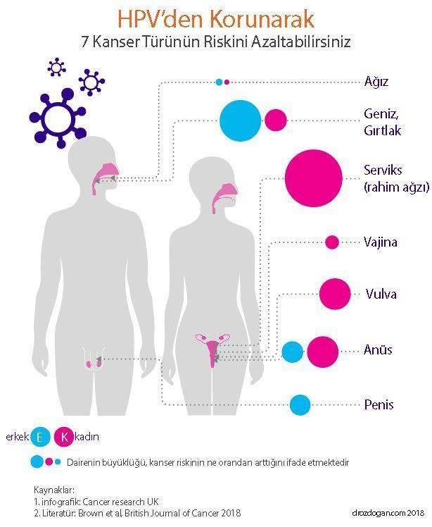 humán papillomavírus hpv nedir