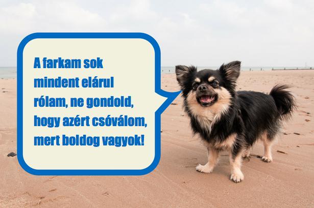 fogd a kutyákat)