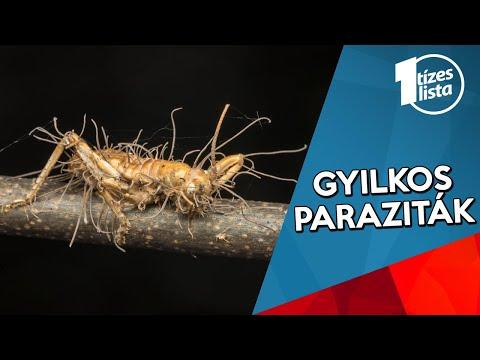 paraziták a Corella kezelésében