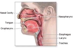 trachealis papillomatosis kezelés)