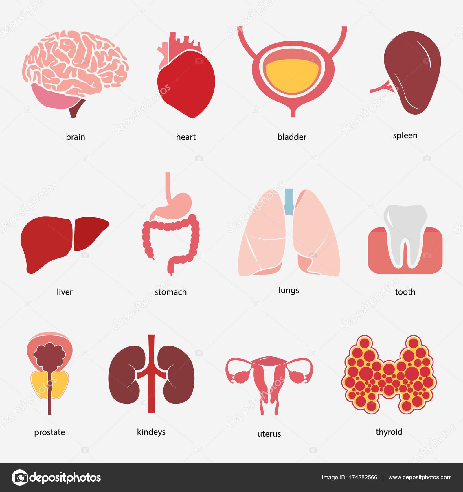 a tüdő endometrium rákja